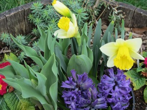 March 2012 bulbs